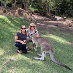 Making friends with the locals! Australia currumbin kangaroo currumbinwildlifesanctuary Queenslandhellip