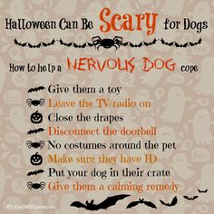 To Dog With Love: Helping Your Nervous Dog Cope with Halloween Night