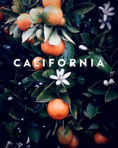 California ◖◖Bella Montreal ◗◗