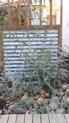 Corrugated iron garden screens