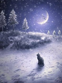 Things I love...moon, snow, cats