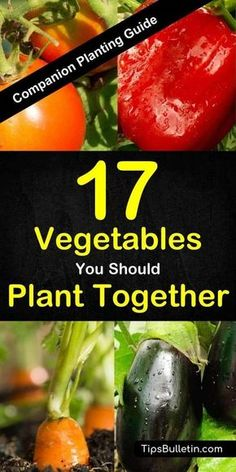 Companion planting guide for 17 different vegetables and its combinations. Covering peppers, squash, tomatoes, zucchini, broccoli, cucumbers, garlic and more. With detailed explanation what vegetables plant together in your garden or in containers.