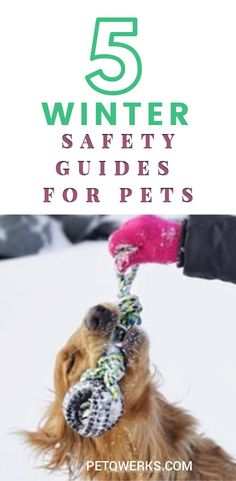 Here are some safety tips that would ensure that your pet remains healthy and playful throughout the winter season by avoiding major threats to your pet's health. Winter Time, Winter Season, Animals And Pets, Cute Animals, Dog Poems, Loss Of Dog, Fluffy Dogs, Love Pet, Safety Tips