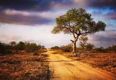 Road to nowhere. by Travis Bester on YouPic Country Roads, Landscape, Scenery, Corner Landscaping