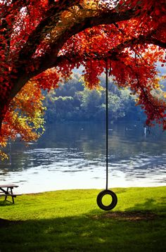 Fall colors, a tire swing & a lake, a Rockwellian dream