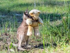 15ofthe cutest images that will make your heart sing