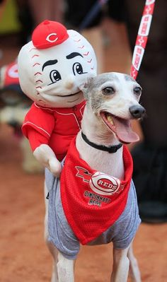 "What is it they say? ""A picture is worth a thousand words"". #Cincinnati #Reds #BarkInThePark www.reds.com"