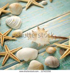 Shell zdjęć w kolekcji, Shell Fotografia stockowa, Shell Obrazy stockowe : Shutterstock.com