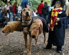 Fluffy dog costume - so cute!