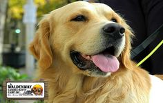 Thing You should Know Why Dogs Suffer From Separation Anxiety? #petcaring #grooming #petboarding