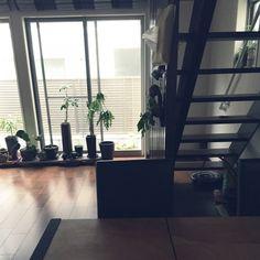 yuyuさんの、ダイニングテーブル,和モダン,ダイニング,観葉植物のある生活,器と植物,観葉植物,グリーンインテリア,階段,ストリップ階段,Overview,のお部屋写真