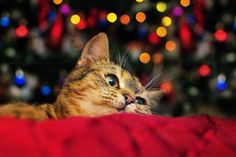 """- Bokeh from Christmas tree lights, this little fellow likes when light-show starts. :)  - All news, info, updates, links, more photos you can find on my  Facebook Fan Page  and if you want to support me just hit """"LIKE"""""""