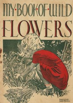 My book of wild flowers