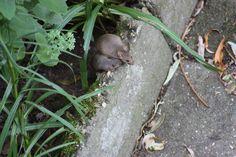 Our garden mice
