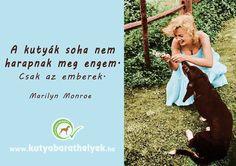 """""""A kutyák soha nem harapnak meg engem. Csak az emberek."""" Marilyn Monroe #kutya #idézet #dog #quotes #kutyabarathelyek #kutyabaráthelyek #kutyásidézet"""