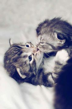 Kitten kisses