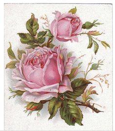 printable *The Graphics Fairy LLC*: Vintage Clip Art - French Roses Postcard Vintage Clip Art, Images Vintage, Vintage Diy, Vintage Ephemera, Vintage Cards, Vintage Postcards, Art Floral, Floral Prints, Graphics Fairy