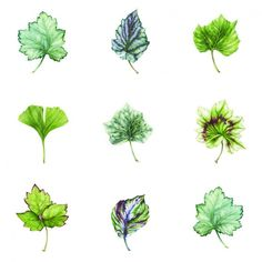 Leafery - Wallcovering - Products