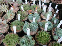 danger garden: Oregon Cactus & Succulent Society Show and Sale