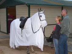 Horse and rider Halloween costume Horse Halloween Ideas, Horse Halloween Costumes, Halloween Makeup, Horse Fancy Dress Costume, Horse Braiding, Horse Ranch, Horse Pictures, Horse Photography, Show Horses