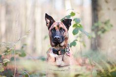 Mariiana Capela photographer Belgium  dog photography