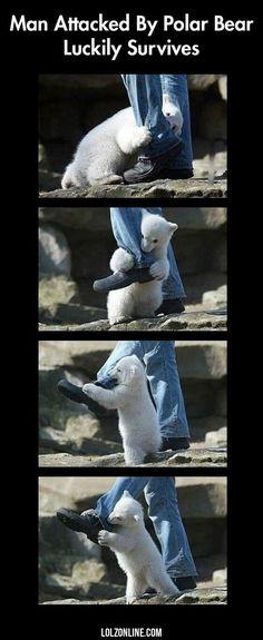 Man Attacked By Polar Bear#funny #lol #lolzonline