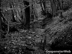 Kirchlengern Forest, Germany: There is a small area of forest in Kirchlengern which has had locals, forester and even the police lost for words. Muttering of mysterious happenings have been traced back to the 12th century and can still be heard today. People walking through report the same feelings of being unsettled, being watched and being overcome with panic for no reason. Animals have often gone missing from the town, their blood and hair being found strewn around this area of woodland.