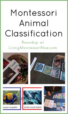 Montessori Animal Classification #Montessori #preschool #homeschool