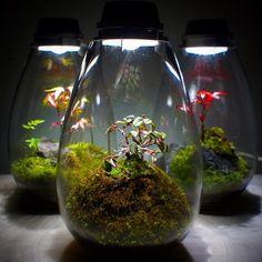 「#苔あかり #モスライト#mosslight #LED#Lightning#コケ#moss#terrarium…」