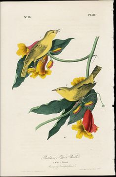 John James Audubon Birds America 1840 First Edition Vol 2,3