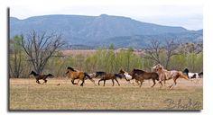 Equus Magic - Bhakti Photography #horses