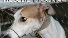 End Dog Racing on Macau!  Nearly 400 greyhounds are killed each year.  If they finish outside the top three in five races in a row, they are destroyed. The head of Macau's animal control department has stated that every greyhound arriving at the track is dead within three years and as many as four hundred greyhounds are killed each year.  PLEASE sign this petition!  Thank you!!