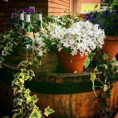 #vogliadigrecia #tavernaouzerimykonos #tavernamykonosreggioemilia #tavernamykonos #greece #greeklife #greekfood #greekstyle #cuoreellenico #solocosebelle