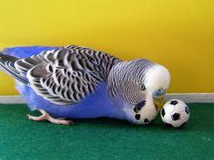 Soccer keet.
