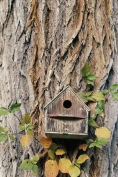 Instructions For Making A Gourd Birdhouse