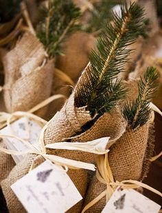 Tree sapling favors – winter wedding or Christmas party