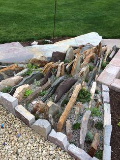My Crevice Garden with alpine perennials!