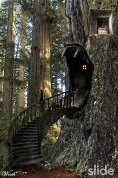 Now, that's a treehouse!