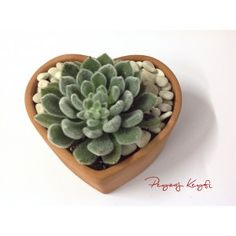 Love it.  Little Terracotta Heart Pot With Succulent Minik Toprak Kalp Saksı