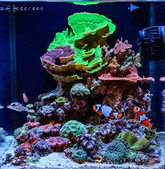 773 best salt water tanks fish images on pinterest in 2018