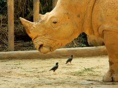 """Зоопарк Сингапура часто ставят в пример по гуманным условиям, созданным для его """"пленников""""."""
