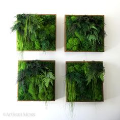 Set of four moss wall art pieces by Artisan Moss