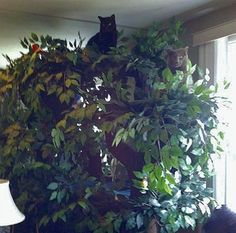 """""""Dexter"""" and """"Jazzie"""" on their Fantasy Cat Tree. #UltimateCatTree"""