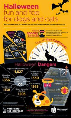 Halloween Fun And Foe Infographic for Pets Halloween Safety Tips, Halloween Fun, Dog Health Tips, Pet Health, Cat Care Tips, Dog Care, Pet Tips, Pet Parade, Amor Animal