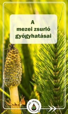 Herb Garden, Doterra, Healthy Drinks, Herbalism, Spices, Health Fitness, Herbs, Medical, Diet