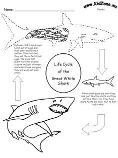 Sea Life coloring page with a picture of 3 Great White