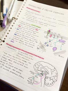 Phospholipids and Calcium Signalling