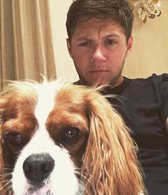 Read puppies from the story Niall's the type of boyfriend «ziall Liam Payne, Louis Tomlinson, Niall Horan Baby, Naill Horan, Theo Horan, Simon Cowell, Irish Boys, Irish Men, Nicole Scherzinger