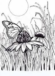 nature colouring pages for adults - Google Search