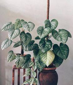 Belle Plante, Plant Aesthetic, Foliage Plants, Rare Plants, Plant Illustration, Garden Trees, Cool Plants, Plant Decor, Houseplants